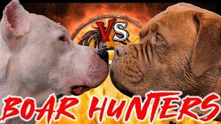 Dogo Argentino vs Dogue De Bordeaux | Dogo Argentino vs French Mastiff | Billa Boyka |