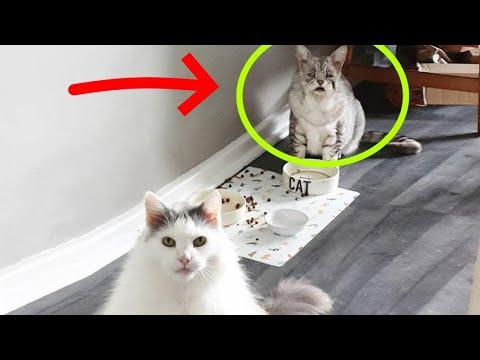 Самый грустный кот обвисшей за 15 января