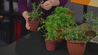 Tips On Growing Herbs Indoors