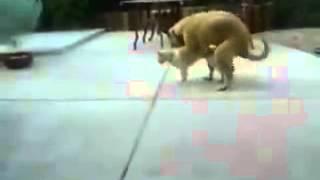 Tier gefickt vom frau wird