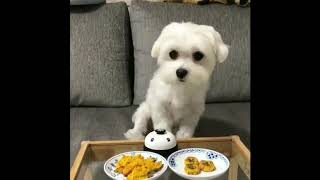 Funny Dogs & cats Compilation 2019.........😅😜🤣😅🤣