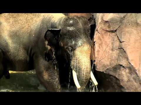 Cincinnati zoo discount coupons