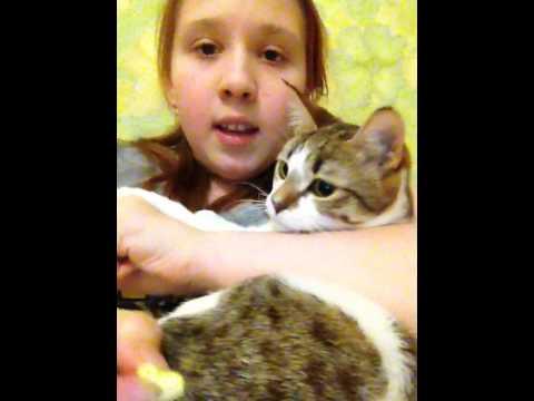 видео: Мой любимый кот Лиза . Карамелька ю