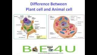 Difference between Plant cell and Animal cell (15 Differences ...