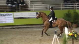 ♂ Luigi d'Amaury- jumping stallion  (SF) by Quidam de Revel