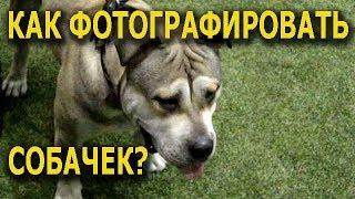 ОБХОХОЧЕШЬСЯ! Как делали Фото собак