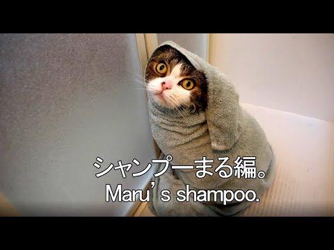 シャンプーされるまる。-Maru's shampoo.-