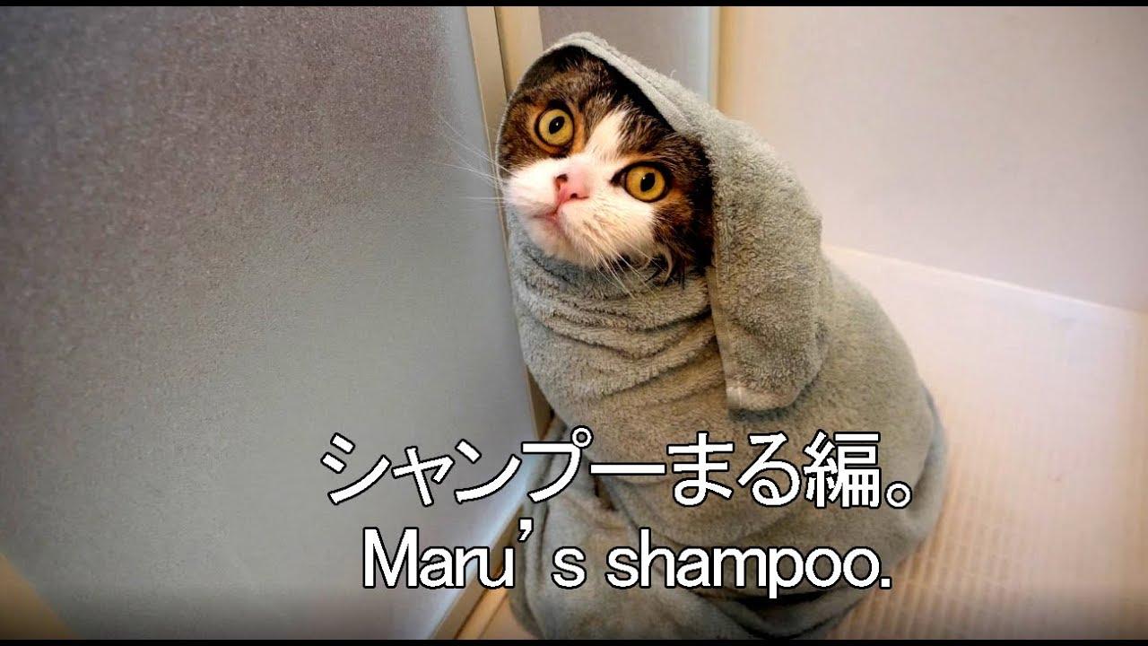 シャンプーされるまる-maru-s-shampoo