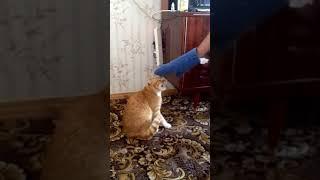 Кот умнее человека