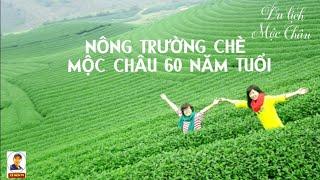 Review Nông Trường Chè Tân Lập Hơn 60 Năm Tuổi Trên Cao Nguyên Mộc Châu | So Sánh Chè Shan & Ô Long