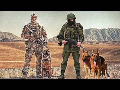 Military German Shepherd American Vs Russian Style Youtube