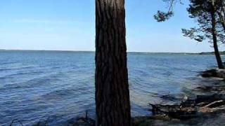 Le lac de biscarrosse dans les landes.