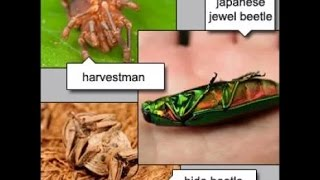 10 Amazing Insect Defensive Tactics