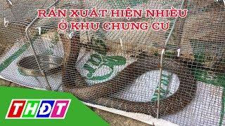 Rùng mình khi nhiều rắn độc xuất hiện tại Chung cư | THDT
