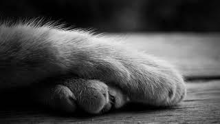 Почему кошка топчет вас лапками мнение ученых