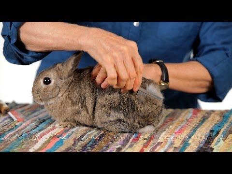 do-rabbits-shed?-|-pet-rabbits