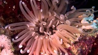 Водная жизнь - [21_26] Подводный город