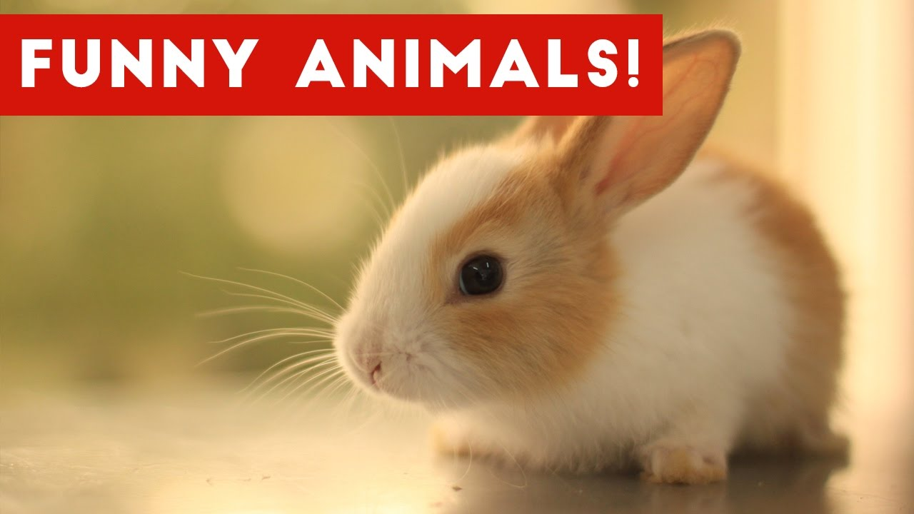 Funniest Pet & Animal Moments Caught On Tape Compilation November 2016   Funny Pet Videos