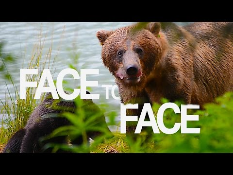 A Very GRIZZLY Encounter on an Alaskan Cruise  | Touring Tricks Webisode