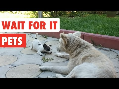 Wait For it Pets | Funny Pet Video Compilation 2017