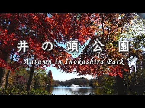 井の頭公園 Autumn in Inokashira Park