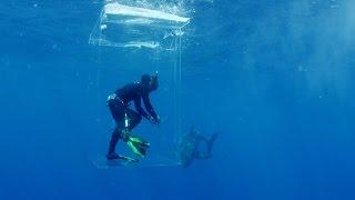 L'île des requins géants: il est entouré de requins et sa cage ne ferme plus !