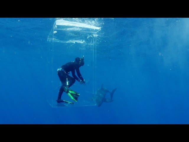 Discovery channel france l'ile des requins geants: il est entoure de requins et sa cage ne ferme plus !