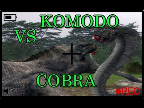 KOMODO VS COBRA - YouTube