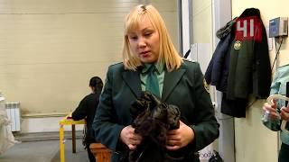 Норковая шуба оказалась из кролика / Новости