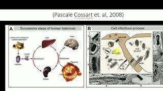 Langkah Aman Bebas Bakteri Listeria | REDAKSI SIANG (29/06/20).