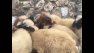 فيديو: نادين الراسي