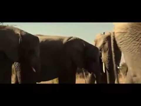 AAkibat menyorok ok dalam vagina gajah kah kah kah thumbnail