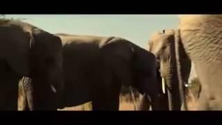 Download Video AAkibat menyorok ok dalam vagina gajah kah kah kah MP3 3GP MP4