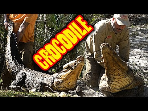 CATCHING A GIANT NILE CROCODILE (UNSCRIPTED AND DANGEROUS)