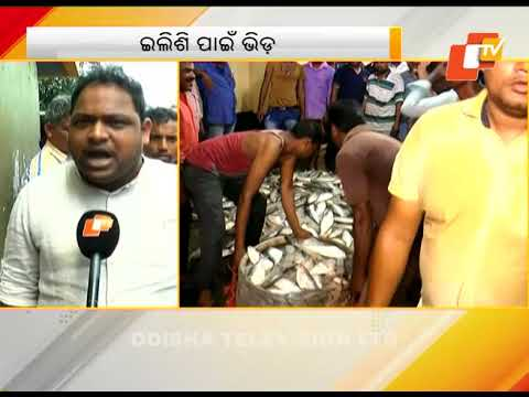 Hilsa prices drop after bumper catch in Paradip