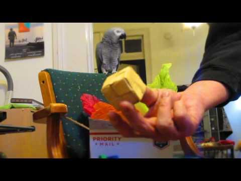 Unboxing Parrot Toys 2