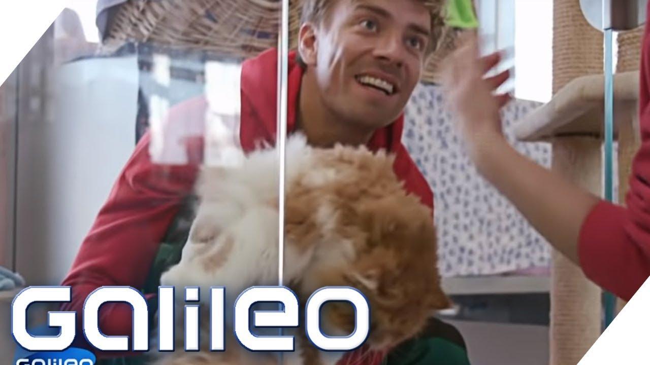 3 Tage als Tierpfleger im größten Tierheim Deutschlands | Galileo | ProSieben