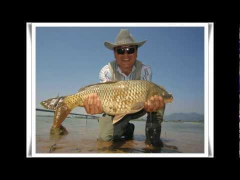 carp fly fishing - nakdong river
