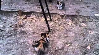 Подборка приколов. Кошки. Трехцветные котята.