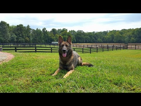 "Protection Dog Sales ""Prufenpuden Farms"" Stay & Training Facilities LaGrange Kentucky"