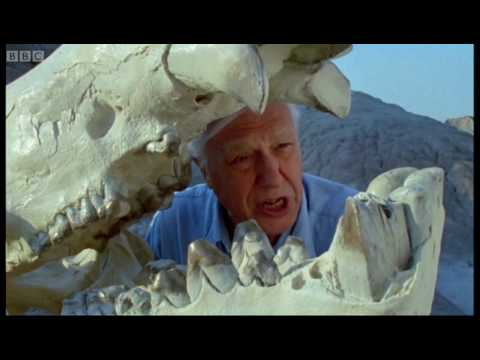 From Dinosaur Age to Today - Attenborough -  Life of Mammals - BBC