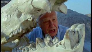 Prehistoric Mammals | Life Of Mammals | BBC Earth