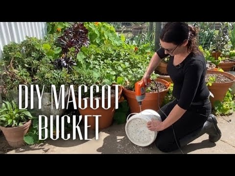 MAGGOT BUCKET FOR MUSCOVIES - Free Food For Ducks