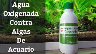 🔵 Agua Oxigenada Para El Acuario Para Eliminar Algas (Acuarios MB)