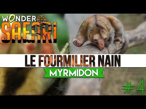 💥WS #4 Le MYRMIDON • Fourmilier nain