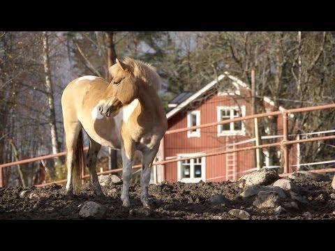 Ratsastuskoulu Poni-Haka, Vantaa