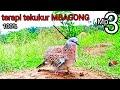Suara Burung Tekukur Cocok Untuk Pancingan Terapi Tekukur Macet Bunyi  Mp3 - Mp4 Download