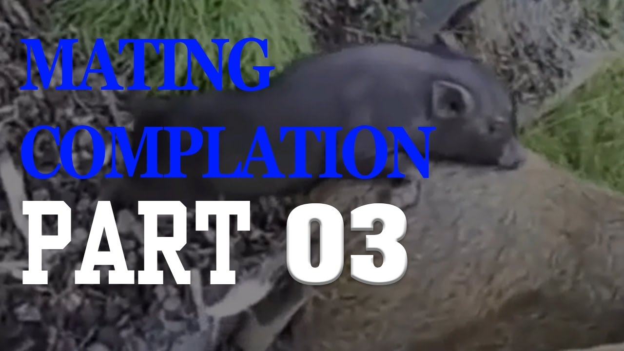 WILD ANIMALS MATING COMPILATION 2017 Season 3,Cow,Horse,Pig,Goat,Cat