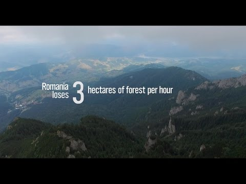 Virgo - The Endangered Virgin Forests of Romania