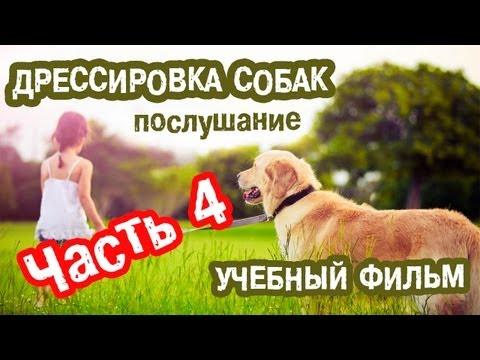 Дрессировка собак (Навыки послушания) Часть 4